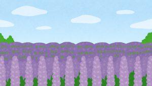 bg_lavender_flower